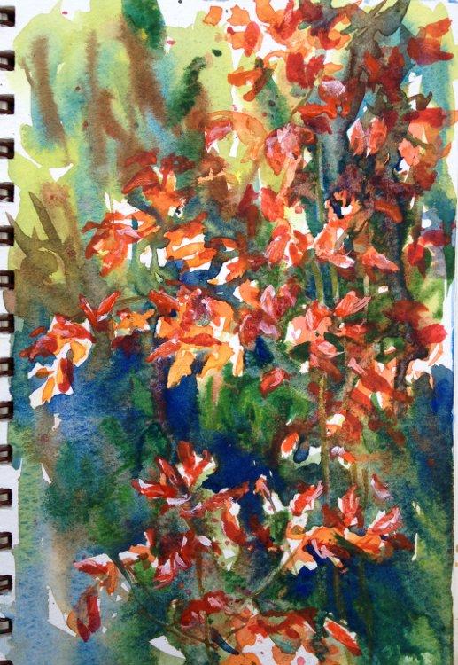 Watercolor Paper Reviews